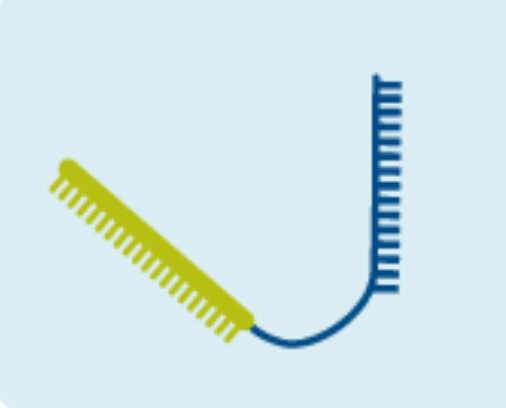 CRISPR-Cas9 crRNA