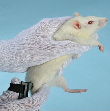 大鼠压痛仪