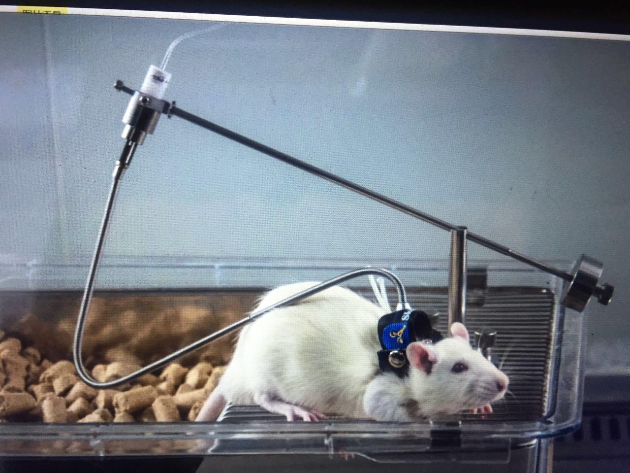 大鼠清醒给药装置