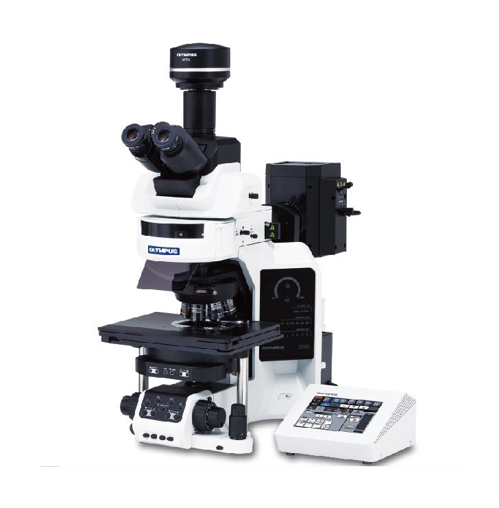 奥林巴斯 BX53 半电动荧光显微镜