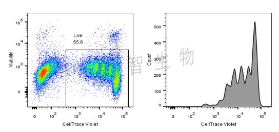 CellTrace染色检测淋巴细胞增殖