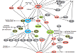 Cell Cycle Control: G2/M DNA Damage Checkpoint