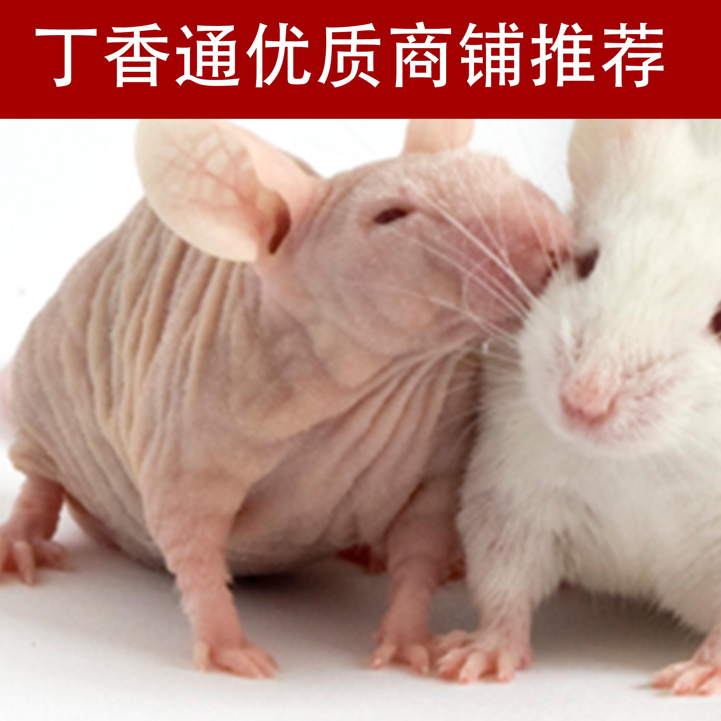 裸鼠移植瘤实验(全国十佳技术服务企业)