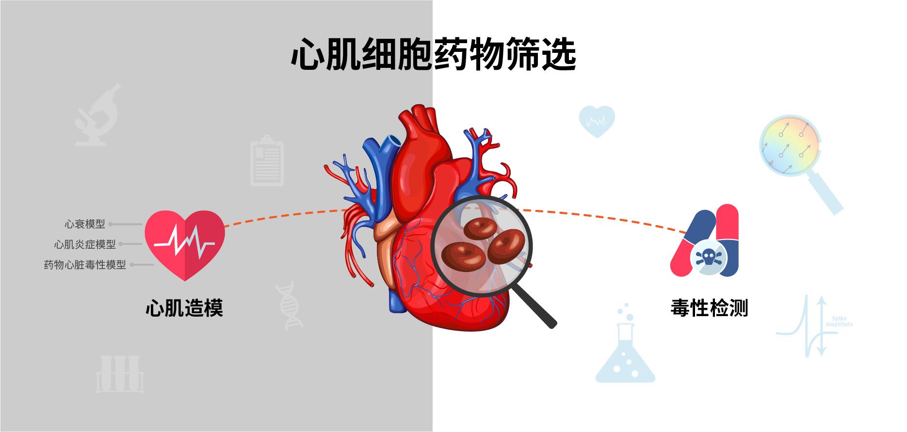 心肌药筛-食品与保健品功能评价