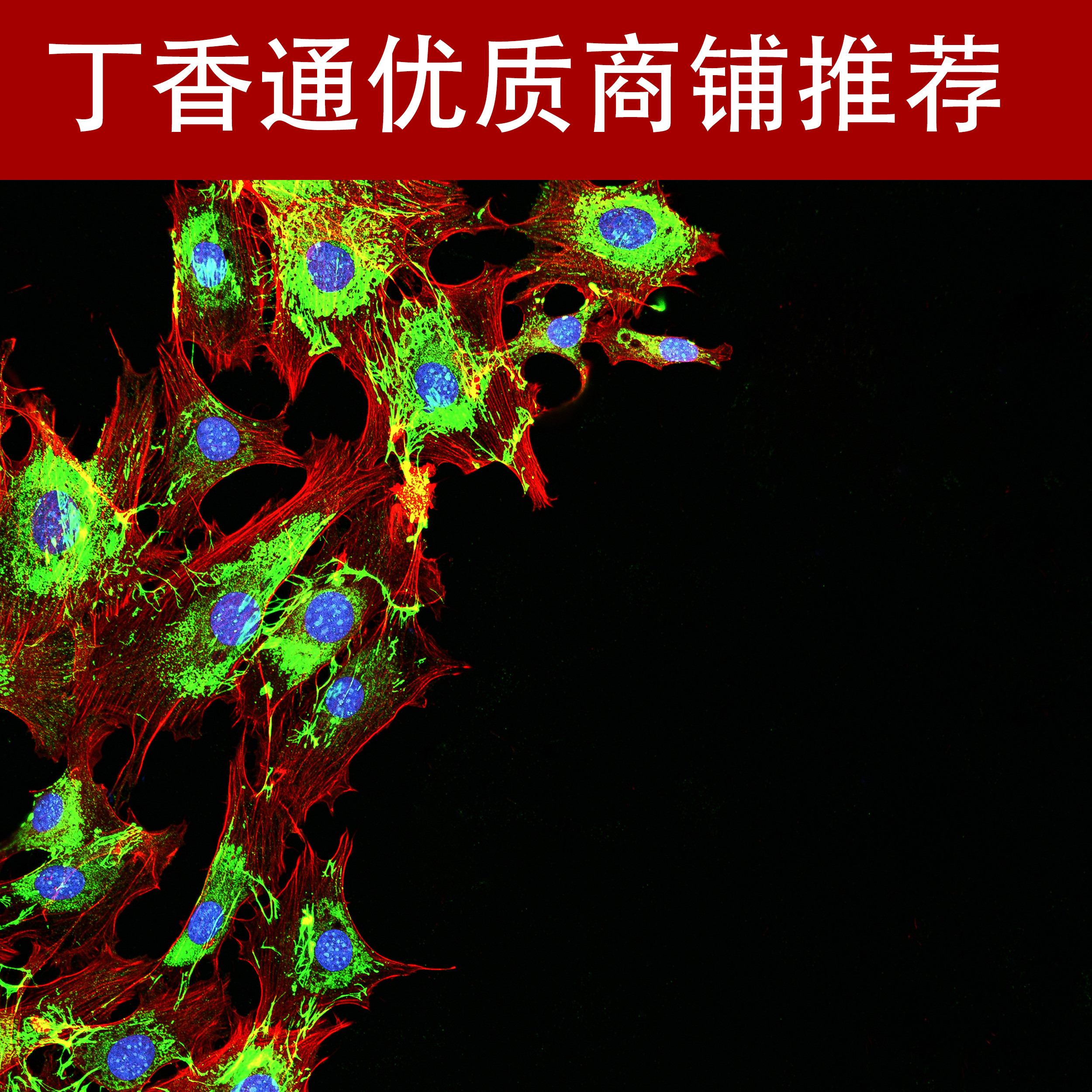 免疫荧光检测技术服务(全国十佳技术服务企业)
