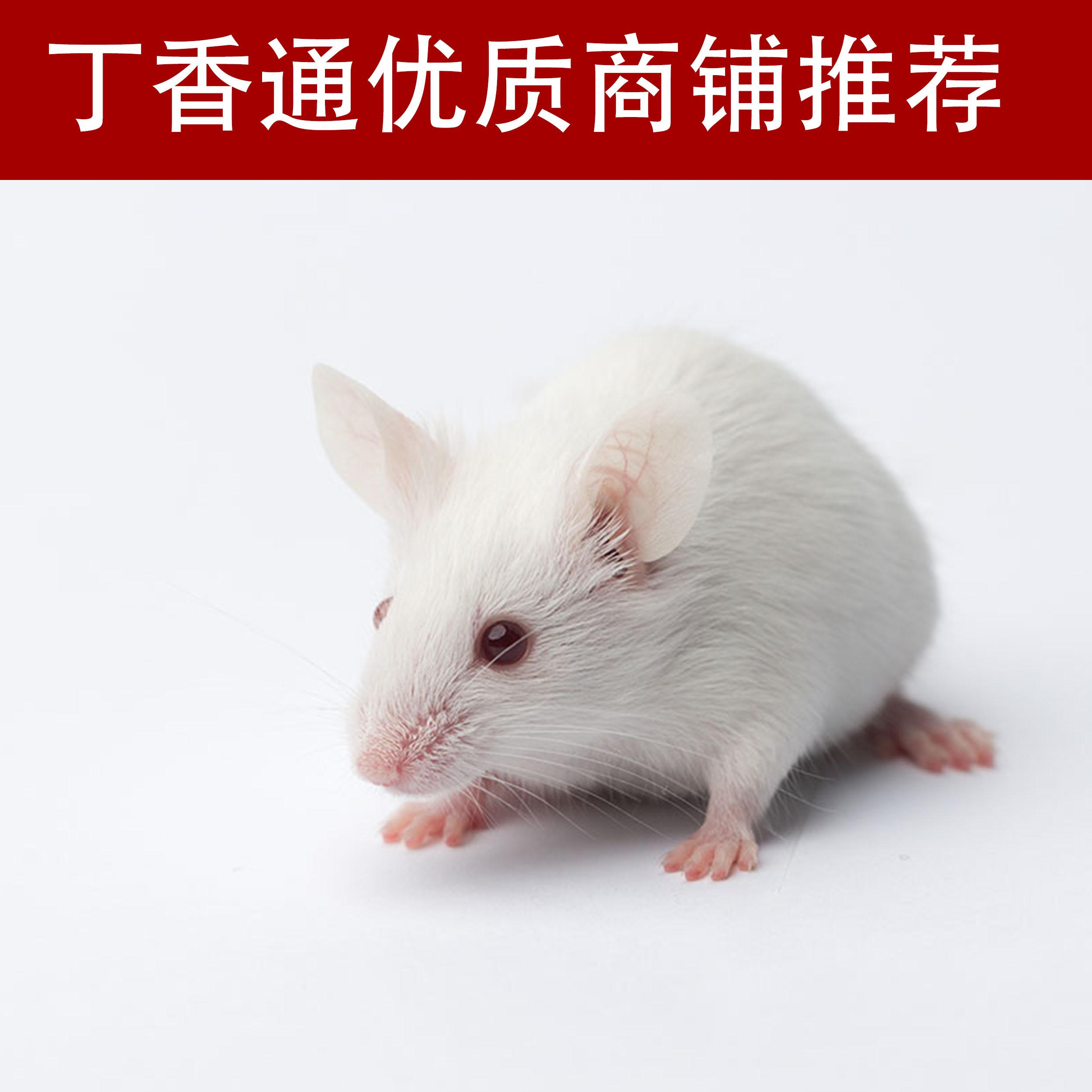 野百合碱诱导肺动脉高压动物模型制备(全国十佳技术服务企业)