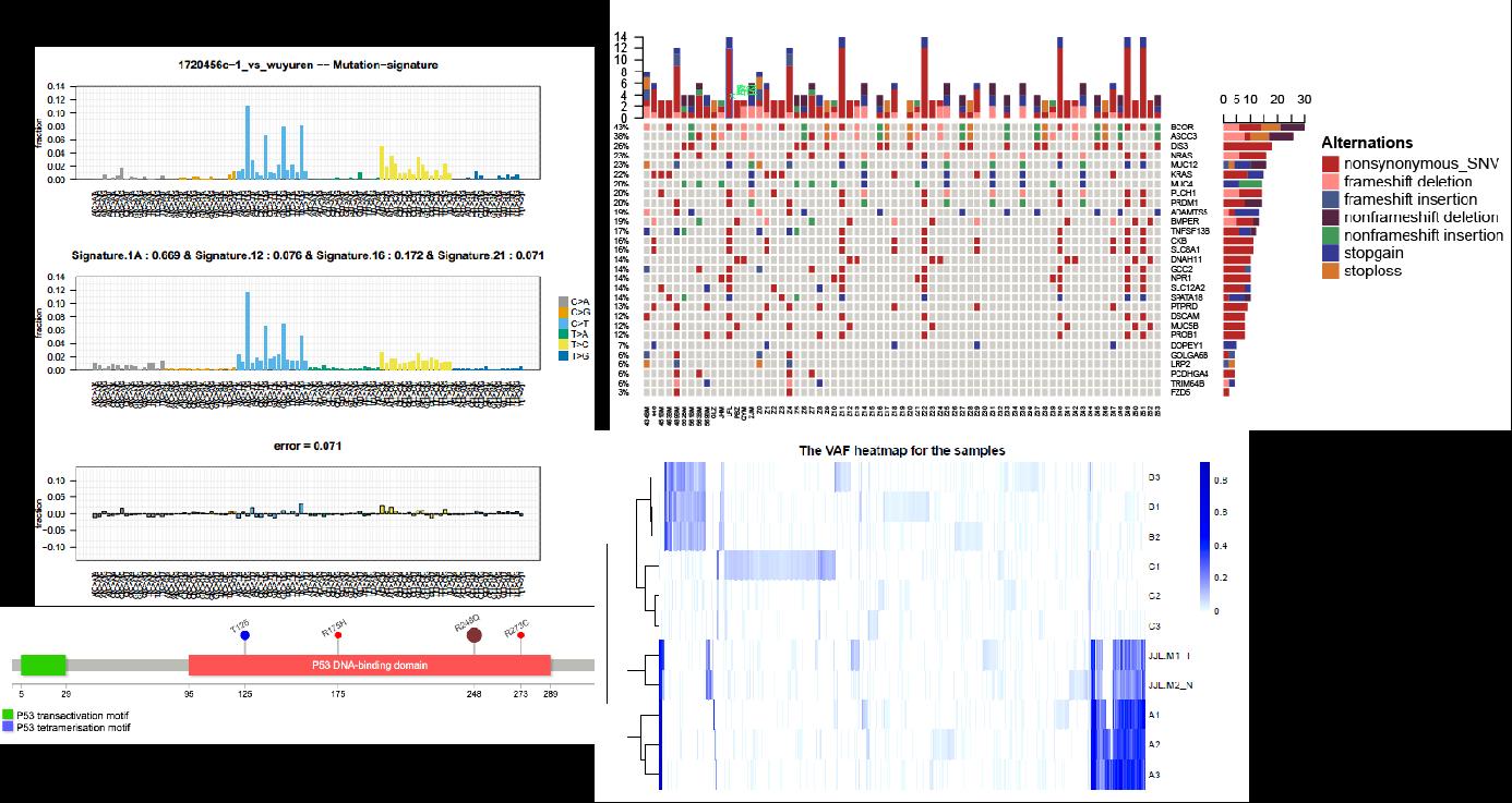 多重PCR-SNP分型技术服务案例分析结果展示