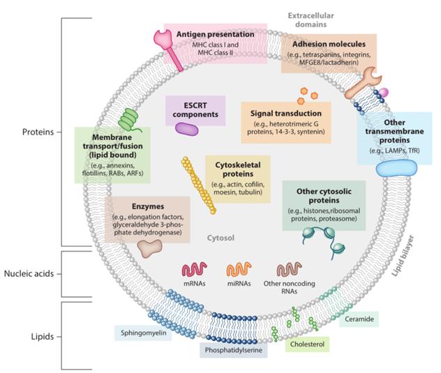 外泌体(Exosome) 提取服务