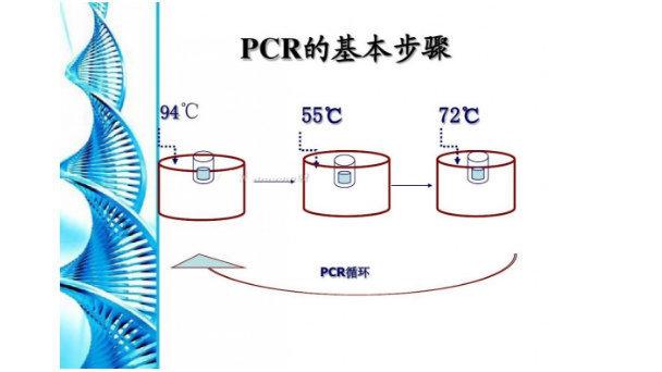 巴布亚旋毛虫PCR检测试剂盒图片