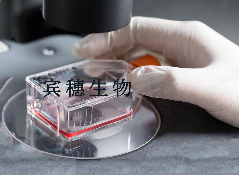 Mv 1 Lu(NBL-7) 貂肺上皮細胞系 復蘇中心低價