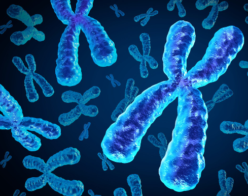 DNA突變或結構變異后蛋白結構三維重構與結構域分析