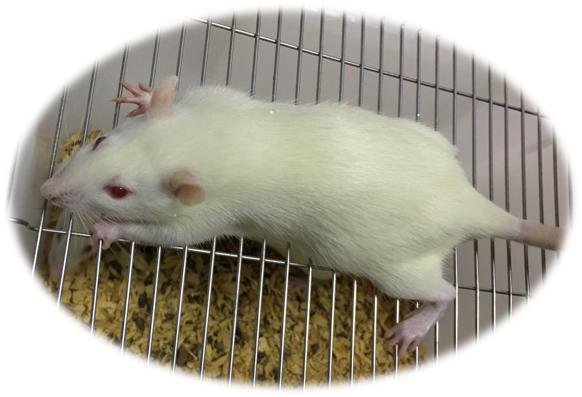 動物飼養及動物實驗技術服務
