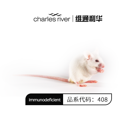 NOG小鼠 重度联合免疫缺陷鼠