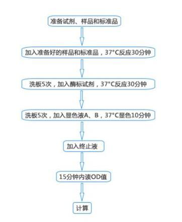 兔环磷酸腺苷(cAMP)elisa酶联免疫试剂盒品牌