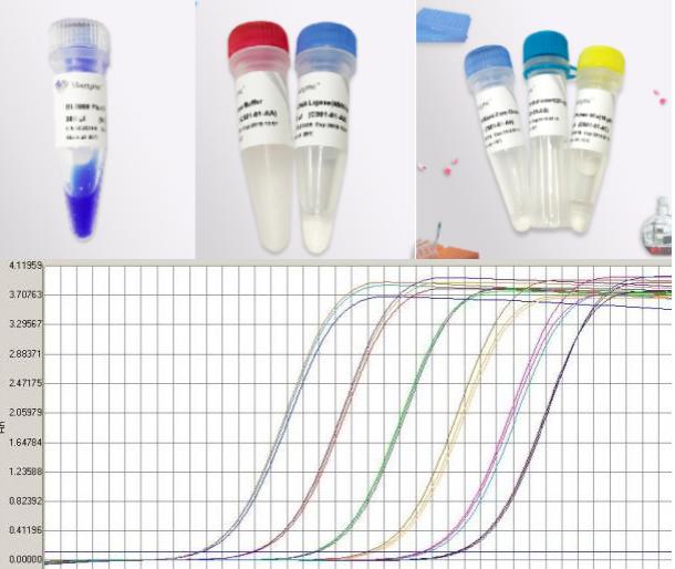 病毒RT-PCR试剂盒