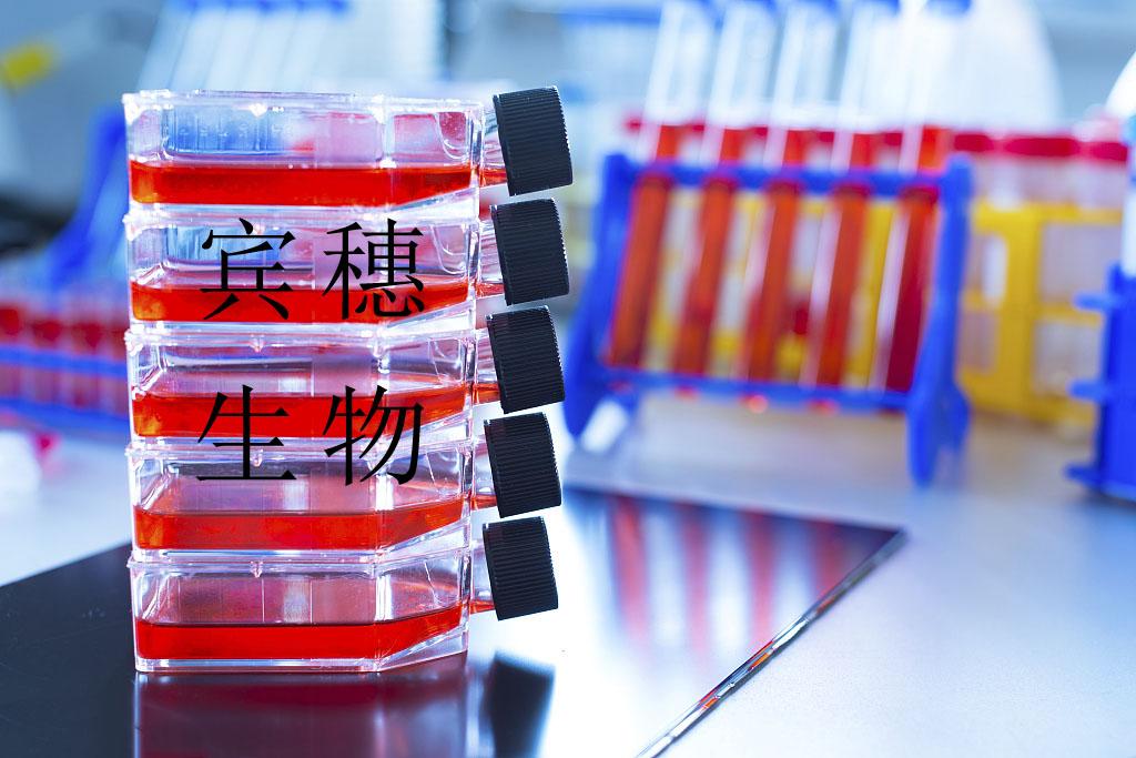 KNS-62细胞<人肺支气管鳞状细胞癌细胞>