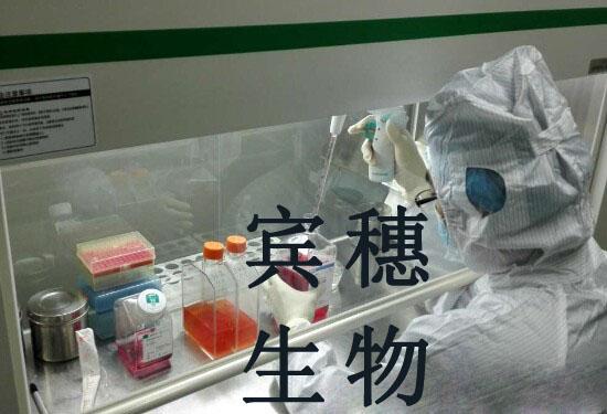 Capan-1细胞<人胰腺癌细胞>