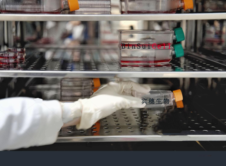 TOV-21G细胞<人上皮性卵巢癌细胞>