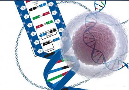 基因差异性检测