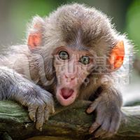猴源Vero细胞鉴定