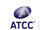 A375; Melanoma; Human (Homo sapiens)-ATCC®CRL-1619