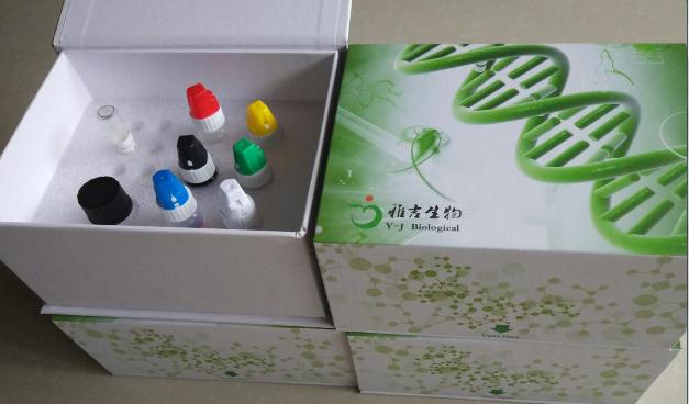 脑胰蛋白酶3免疫组化试剂盒