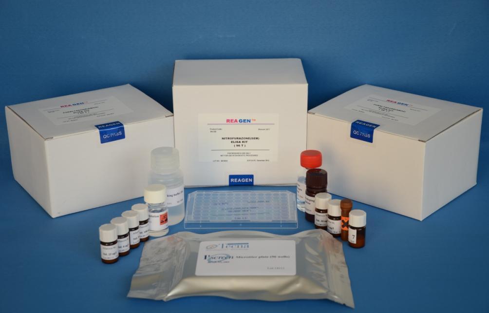 小鼠核因子κB亚基p65(NF-κB p65)ELISA试剂盒