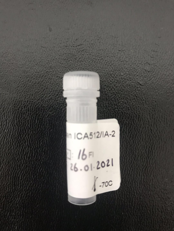 重组胰岛细胞抗原-2