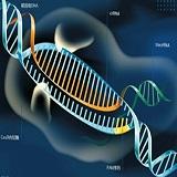 CRISPR/Cas9文庫篩選服務