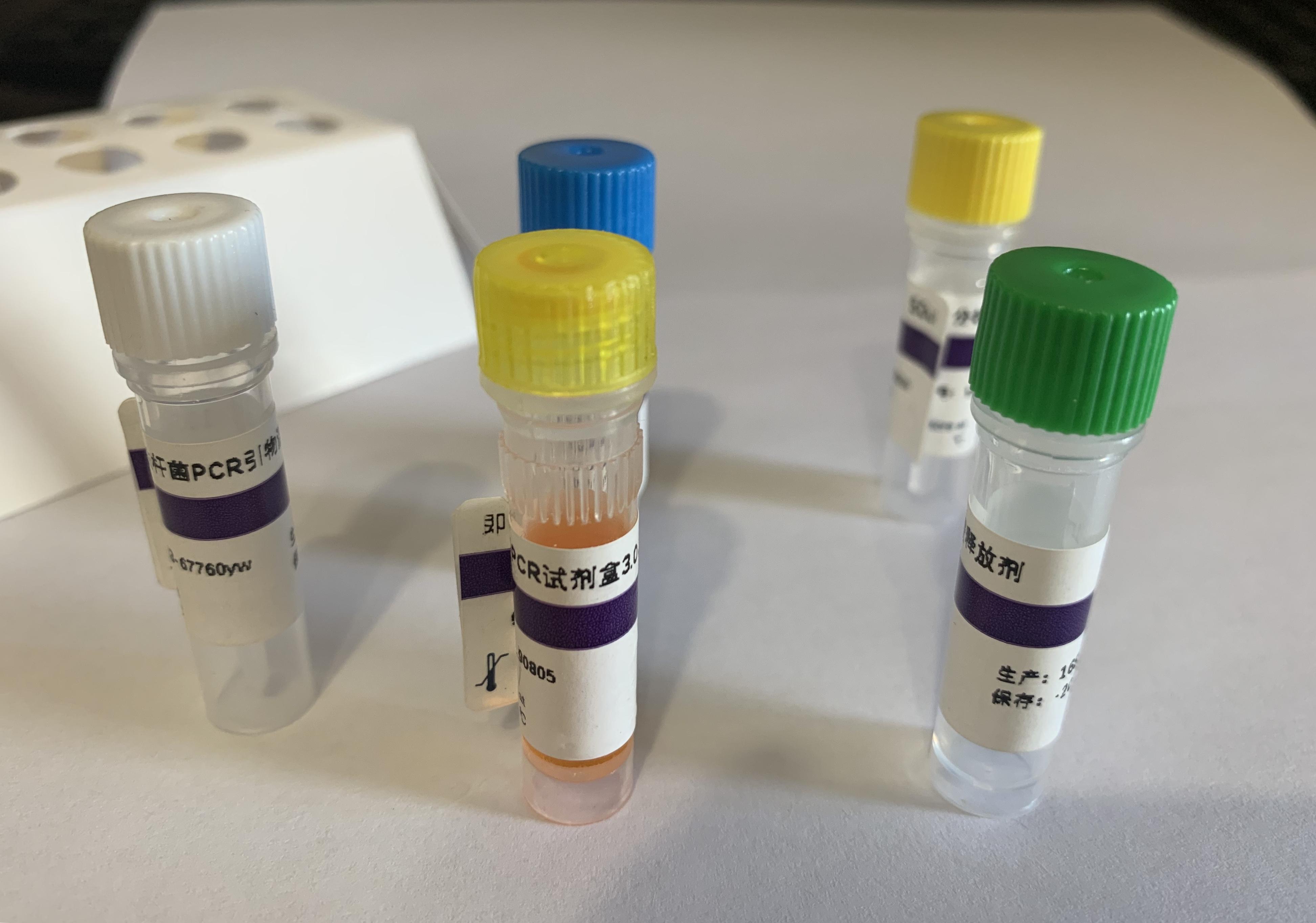 牛呼吸道合胞體病毒(BRSV)核酸檢測試劑盒(熒光-PCR法)