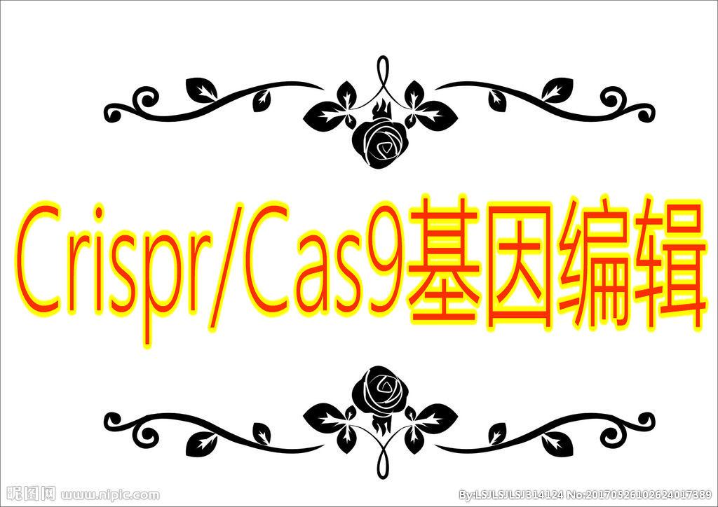 「医药加」Crisp/Cas9基因编辑技术班(含Basci Editor)
