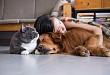 出生 12 天患脑膜炎,竟是因为被狗舔了