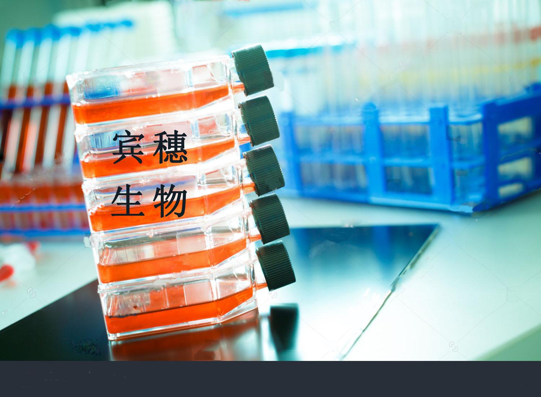 Pan02小鼠胰腺癌细胞 常年直销
