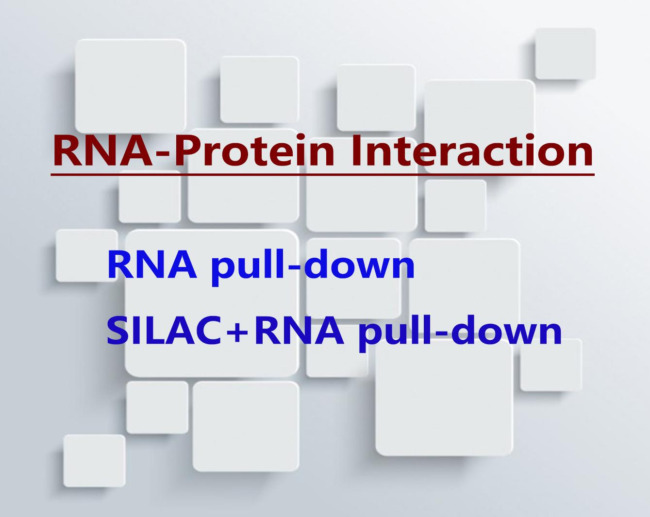 RNA pull-down:RNA-蛋白质互作