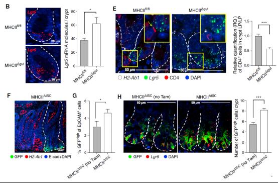 scRNA-seq与RNAscope技术揭示小肠干细胞与免疫细胞的相互作用1318.png