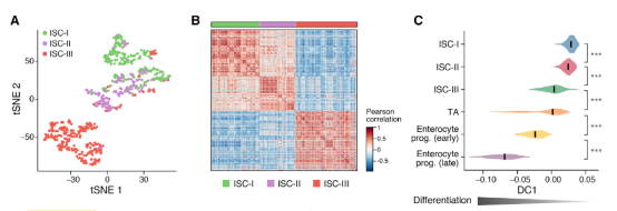 scRNA-seq与RNAscope技术揭示小肠干细胞与免疫细胞的相互作用674.png