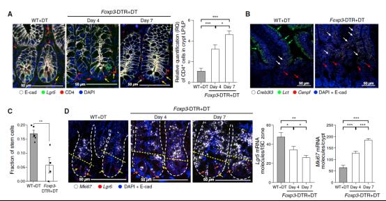scRNA-seq与RNAscope技术揭示小肠干细胞与免疫细胞的相互作用1935.png