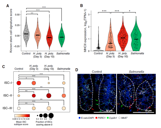 scRNA-seq与RNAscope技术揭示小肠干细胞与免疫细胞的相互作用1604.png