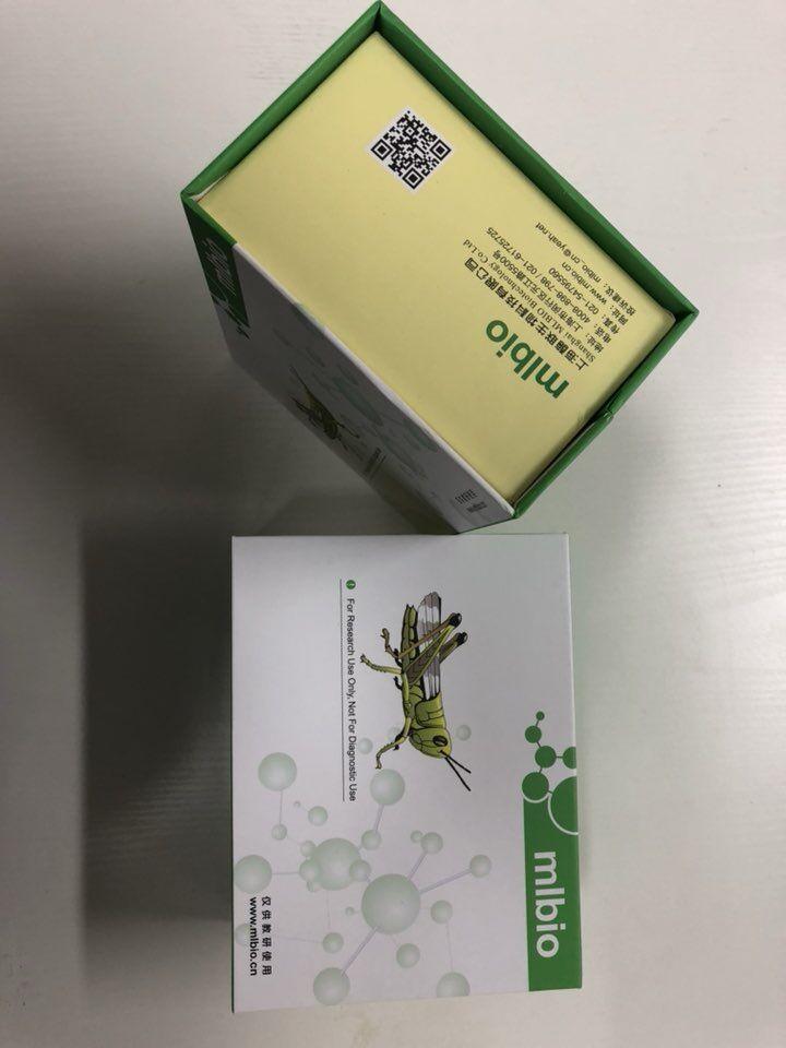 人钙黏蛋白22(CDH22)ELISA试剂盒