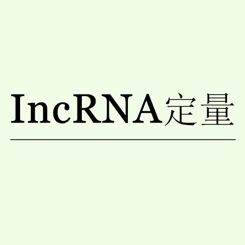 lncRNA定量