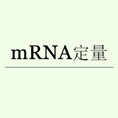 mRNA定量