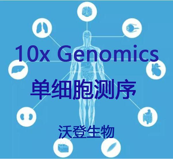单细胞测序服务(10x Genomics )