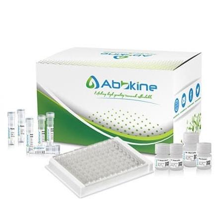 EliKine™ 游离甲状腺素 (fT4) ELISA定量试剂盒