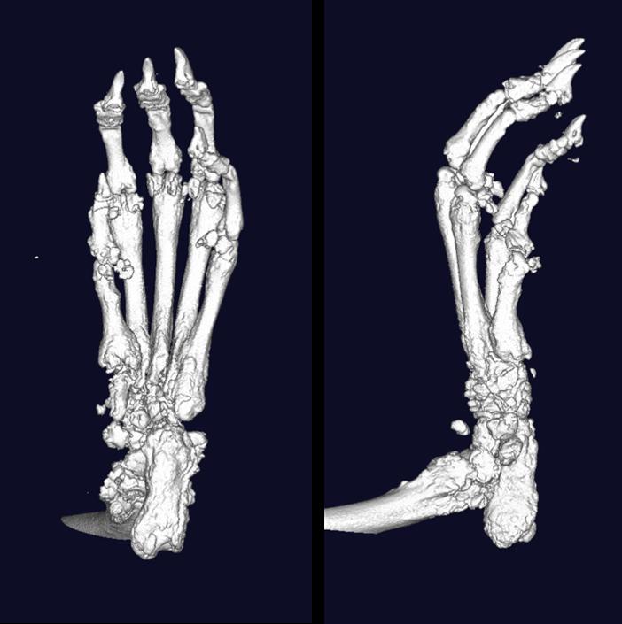 风湿,关节炎 microCT 显微CT 检测分析