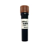 新型无毒 新品促销DSRed核酸凝胶染料 10,000× (M7021-M7022)