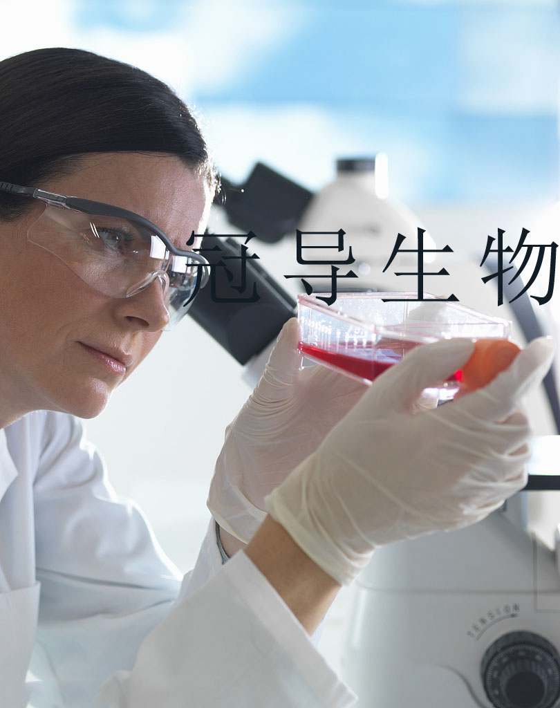 LIPF178C 人胆管癌细胞