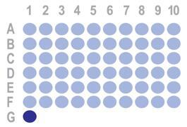 乳腺癌60点组织芯片HBre-Duc060CS-02