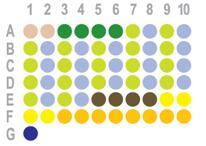 胰腺癌60点组织芯片HPan-Ade060CD-01