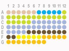 胃癌80点组织芯片HStm-Ade080CD-01
