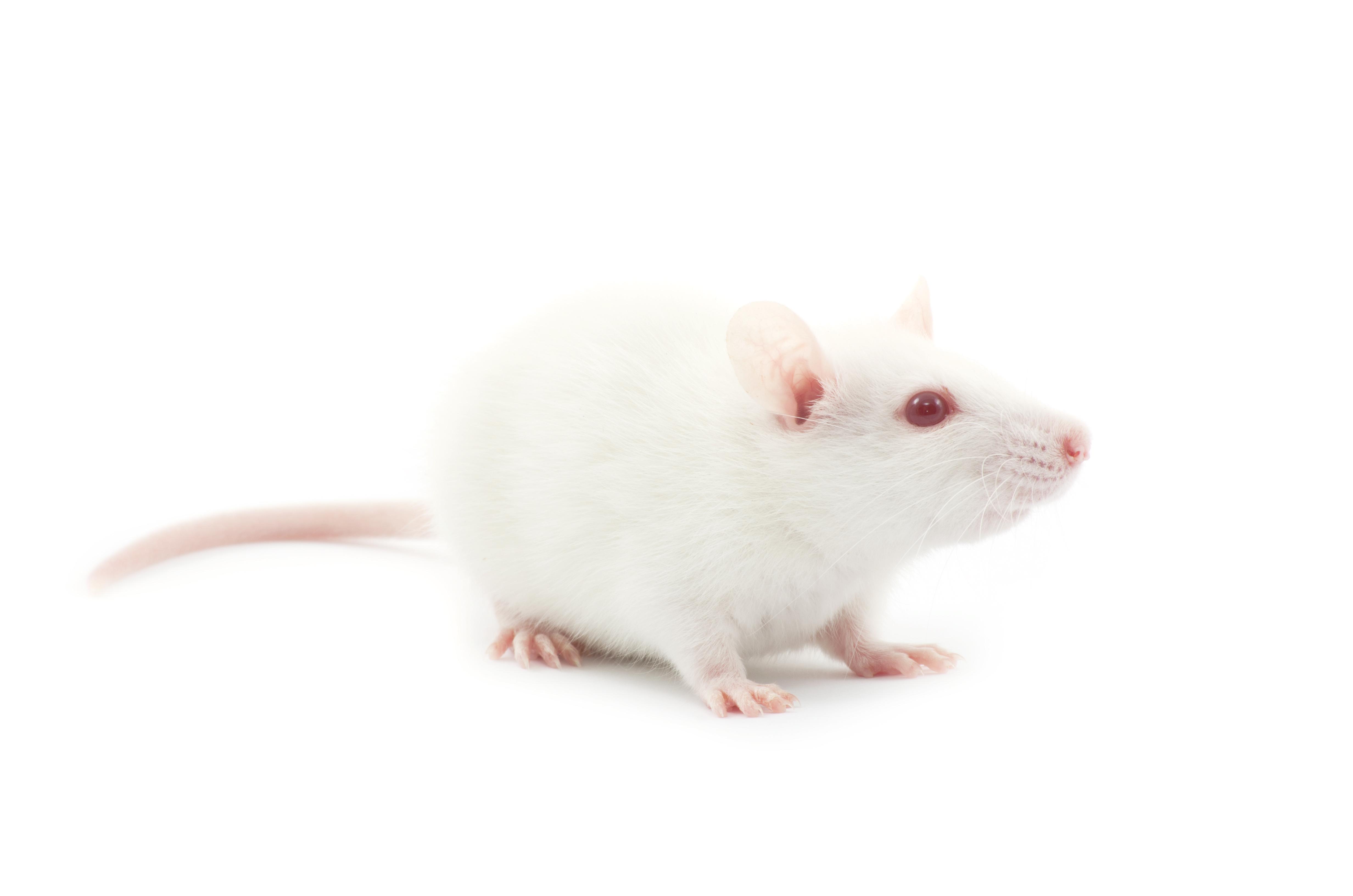 基于B-NDG?小鼠的个体化PDX药效服务